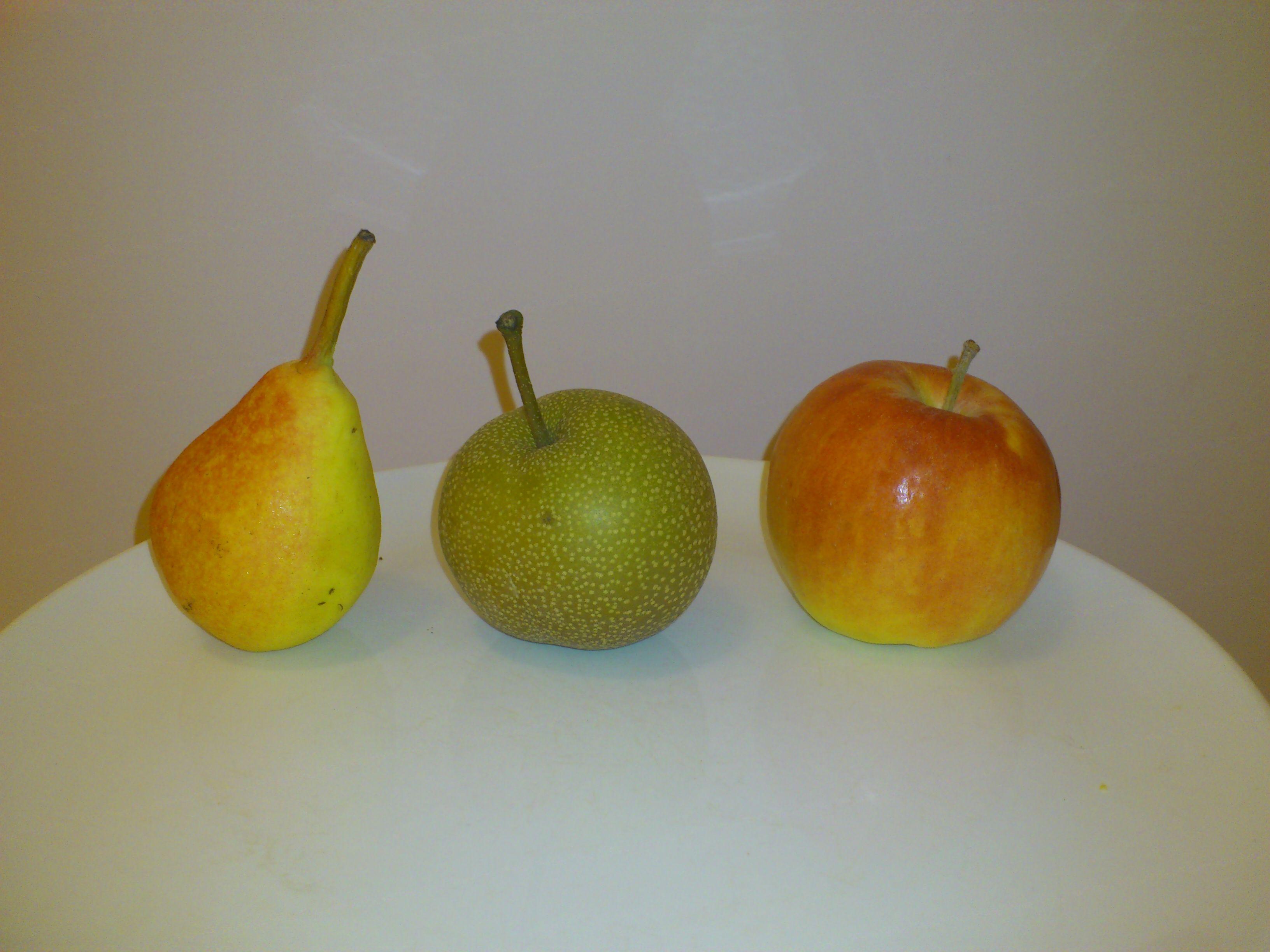 Strange Fruit Apple And Pear Hybrid Strange Fruit Fruit Herbs