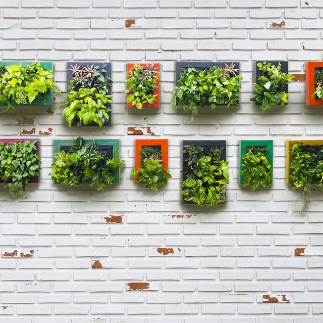 These Vertical Gardens Are Perfect For Small Spaces