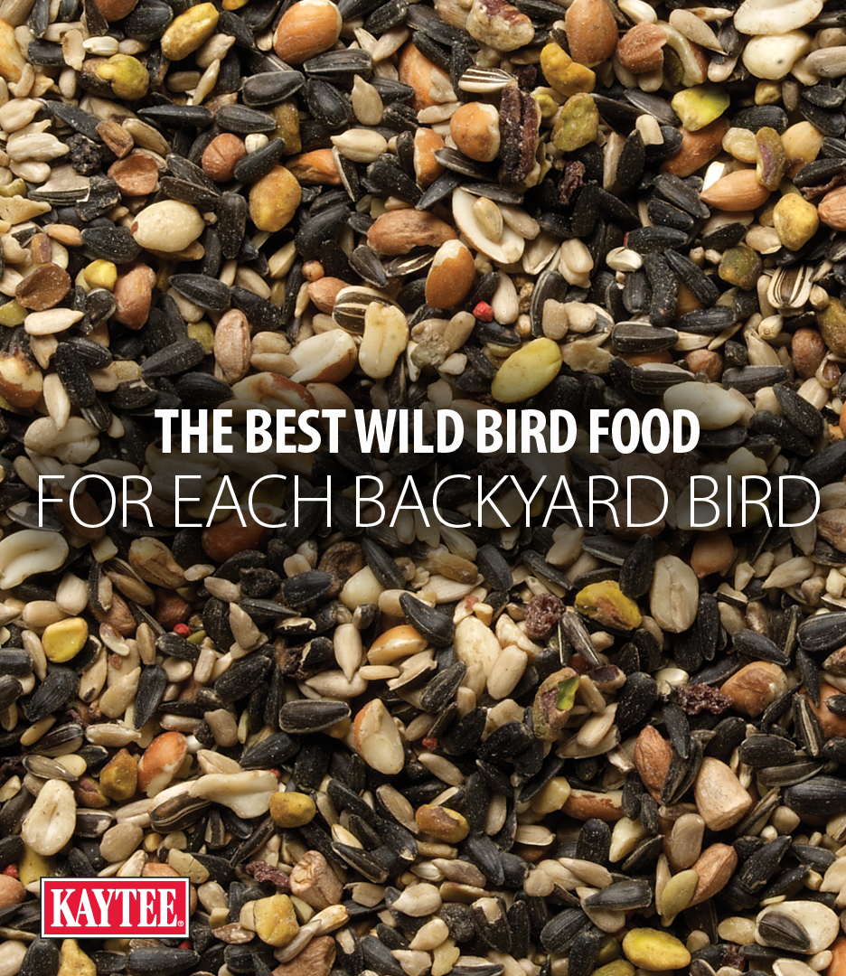 Our Backyard Birding Experts Are Here To Help You Attract