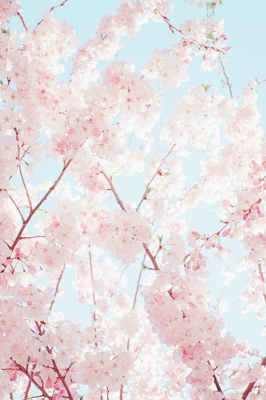 Start To Bloom Iphone Wallpaper Tumblr Aesthetic Flower Phone