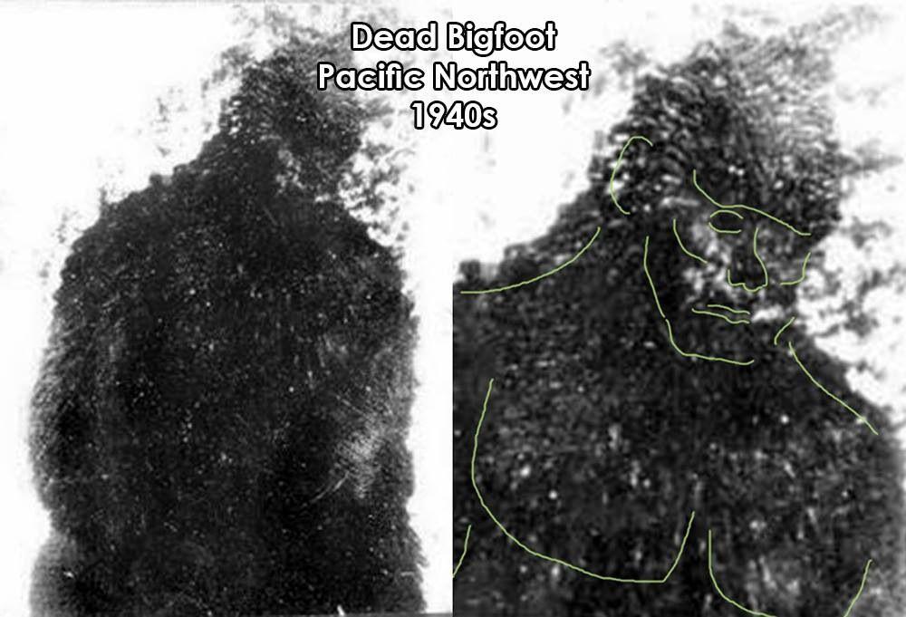 Dead Sasquatch Sasquatch Bigfoot Bigfoot Sasquatch God