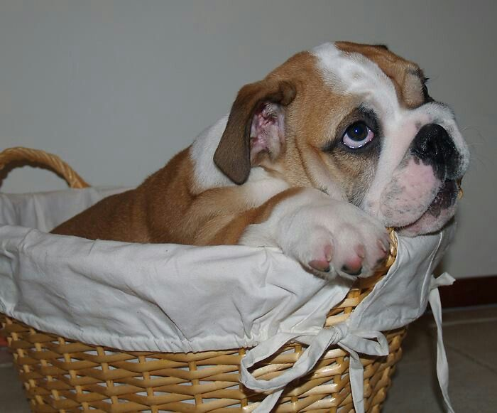 Bully in a basket
