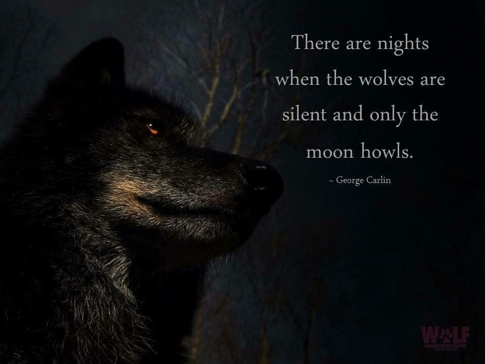 Pin by Laurie McBee on American Witchcraft | Wolf, Wolf