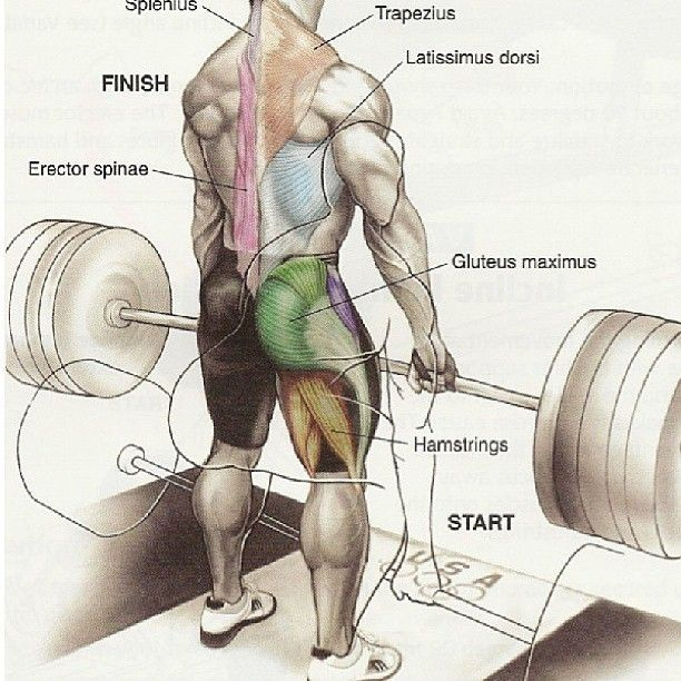 deadlift-muscles-worked