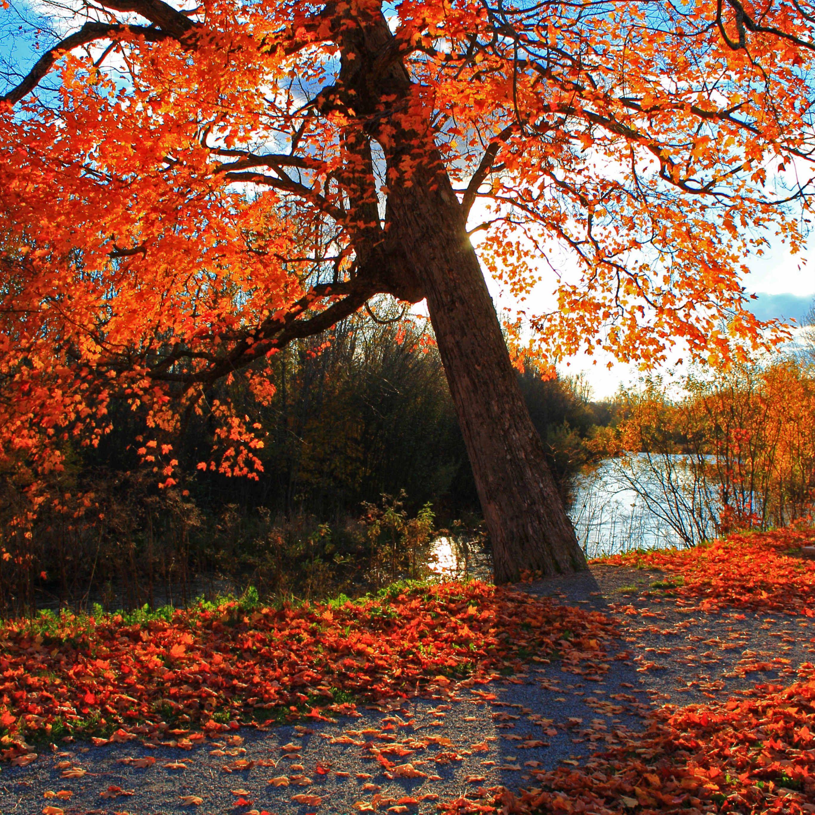 Autumn Park River Shop Landscape Ipad Pro Wallpapers Landscape Edging Diy Winter Landscape Photography Landscape Stairs