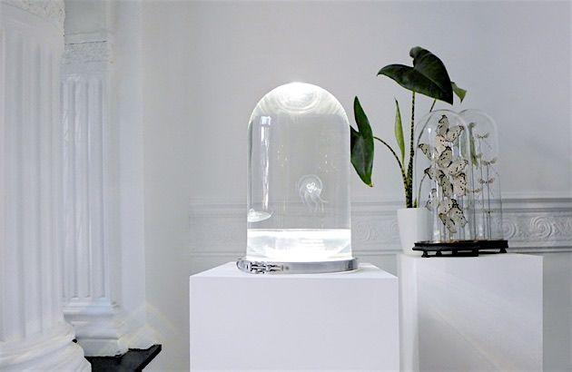 Snygo darwin jellyfish tank9 home pinterest quallen for Dekoration quallen