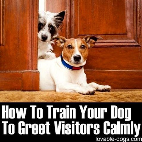 Dog Training Hacks The Beginners Self Help Guide To Successful
