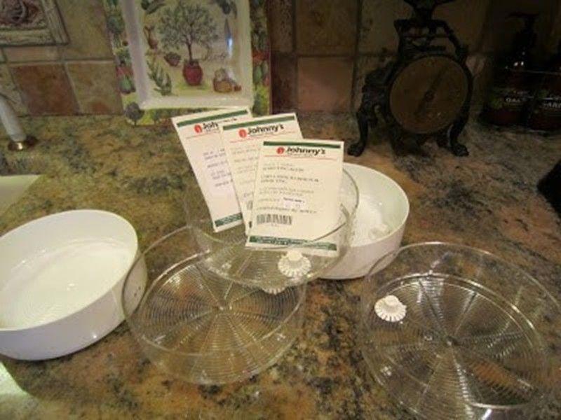 Обеззаразяване на семена в домашни условия с перхидрол