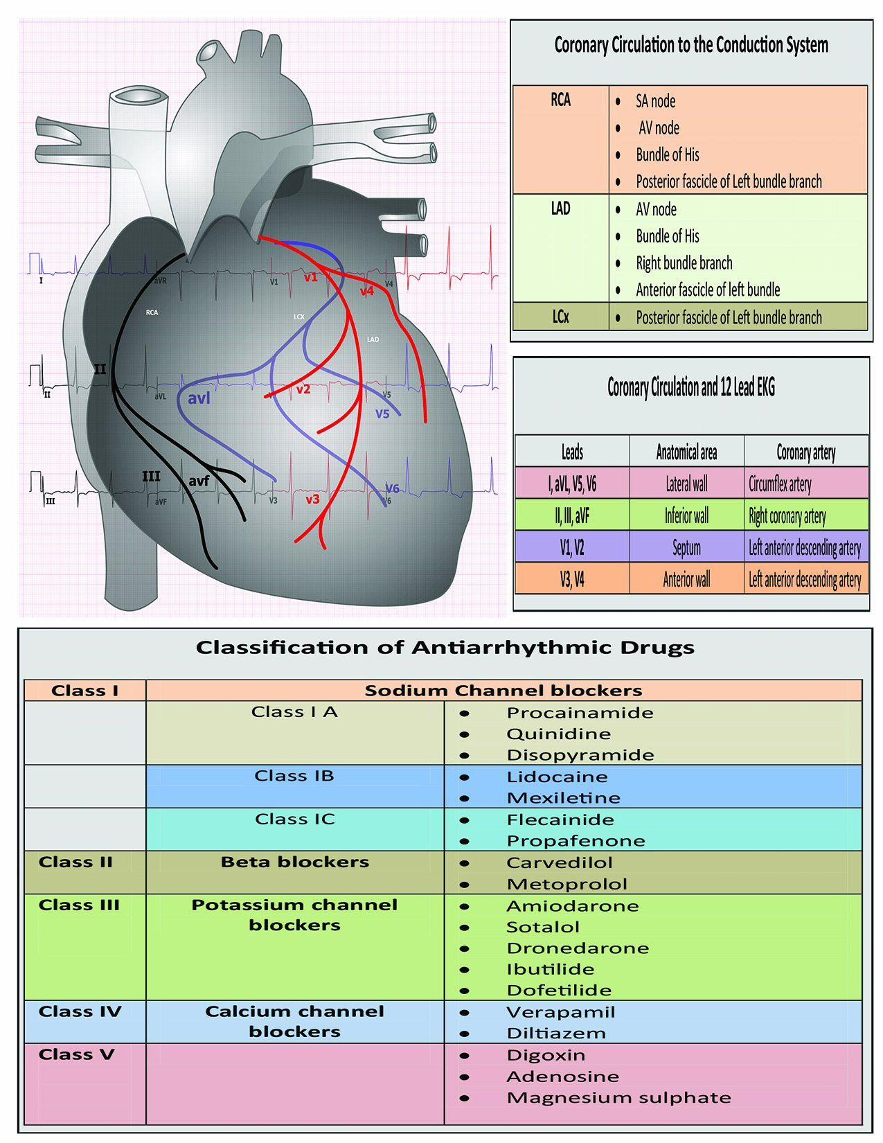 Cardiac Care: ECG Interpretation Made Easy Seminar