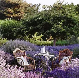 A Beautiful Lavender Farm In Oklahoma Lavender Valley Acres Is Serene And Stunning Country Garden Decor Lavender Garden Cottage Garden