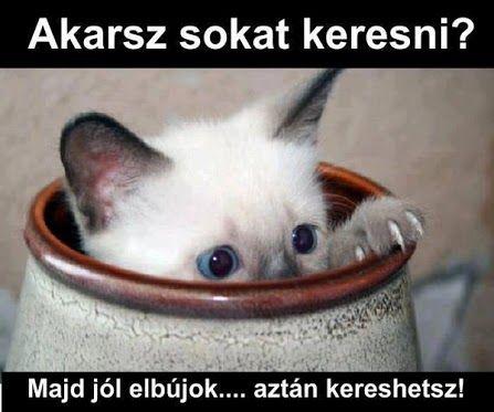 vicces rövid idézetek 4304767_orig. (447×373) | Funny cats, Animals, Monday humor quotes