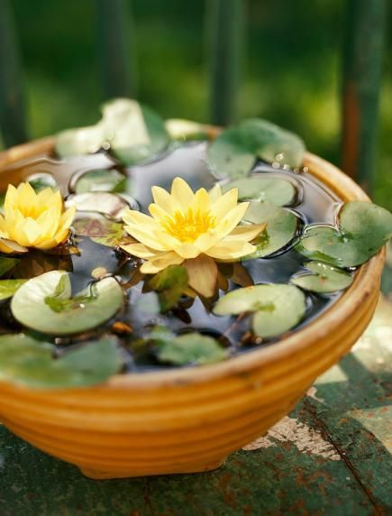Miniature Tabletop Water Garden Www Containerwatergardens Net Indoor Water Garden Water Garden Container Water Gardens