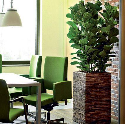 Plantas de interior que no necesitan mucha luz plantas - Plantas que no necesitan luz ...
