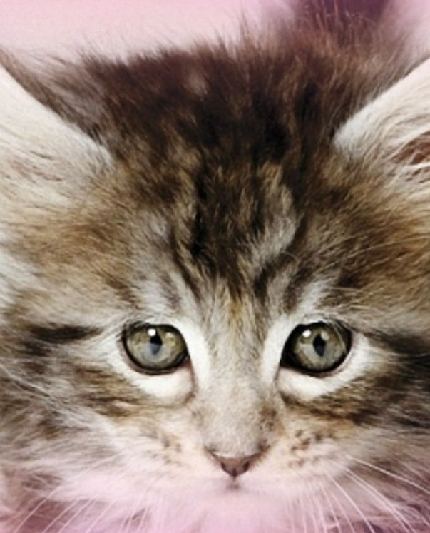 More cute kittens HERE