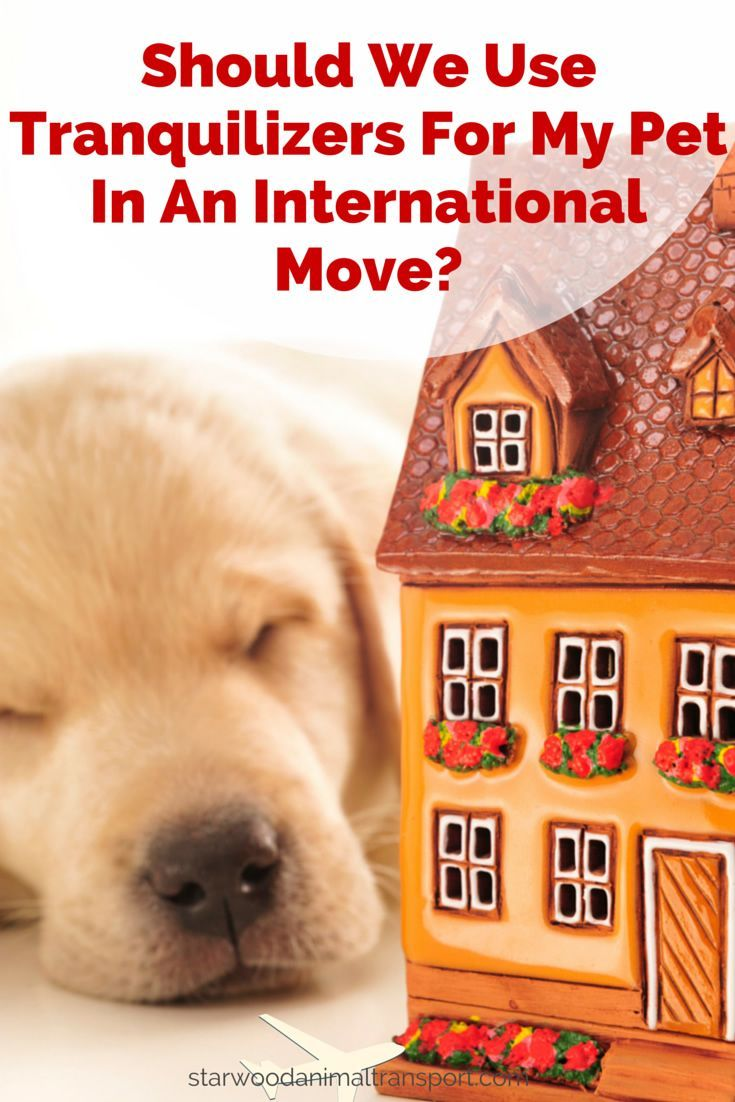 Should We Use Tranquilizers For My Pet In An International Move International Move Tranquilizer Pet Travel