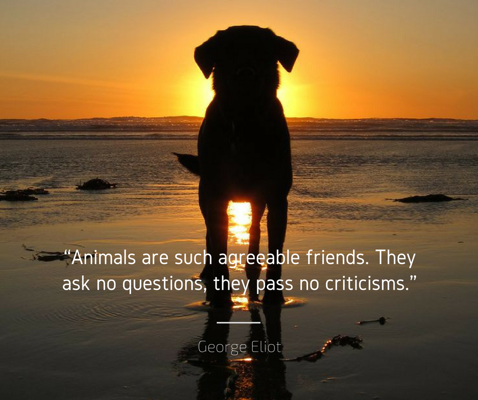 Agreeable Friends Veterinary Services Dog Best Friend Dog Friends