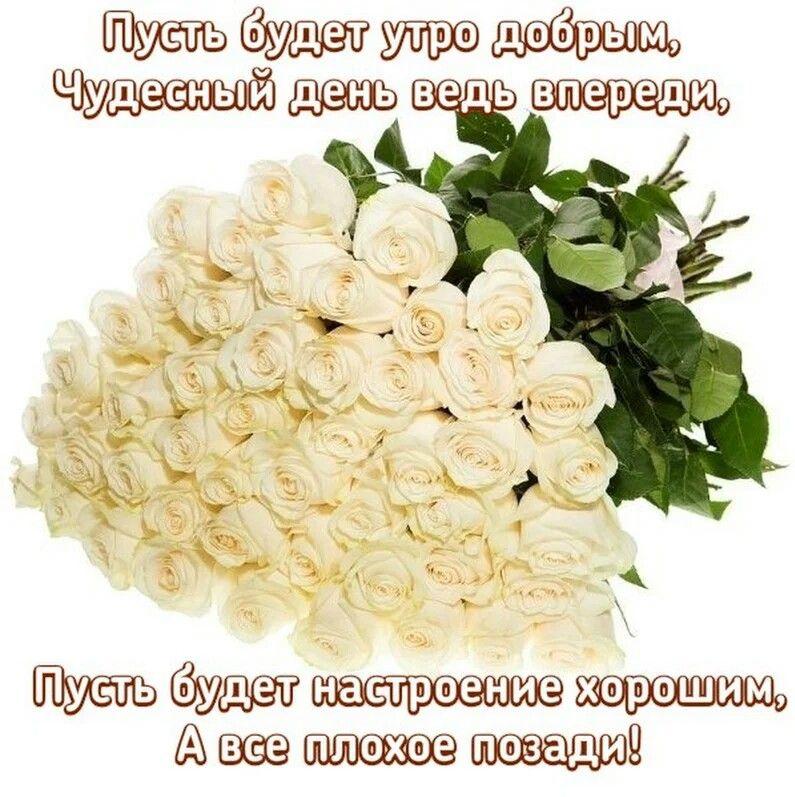 торговле картинки большой букет белых роз доброе утро руках могут возникать