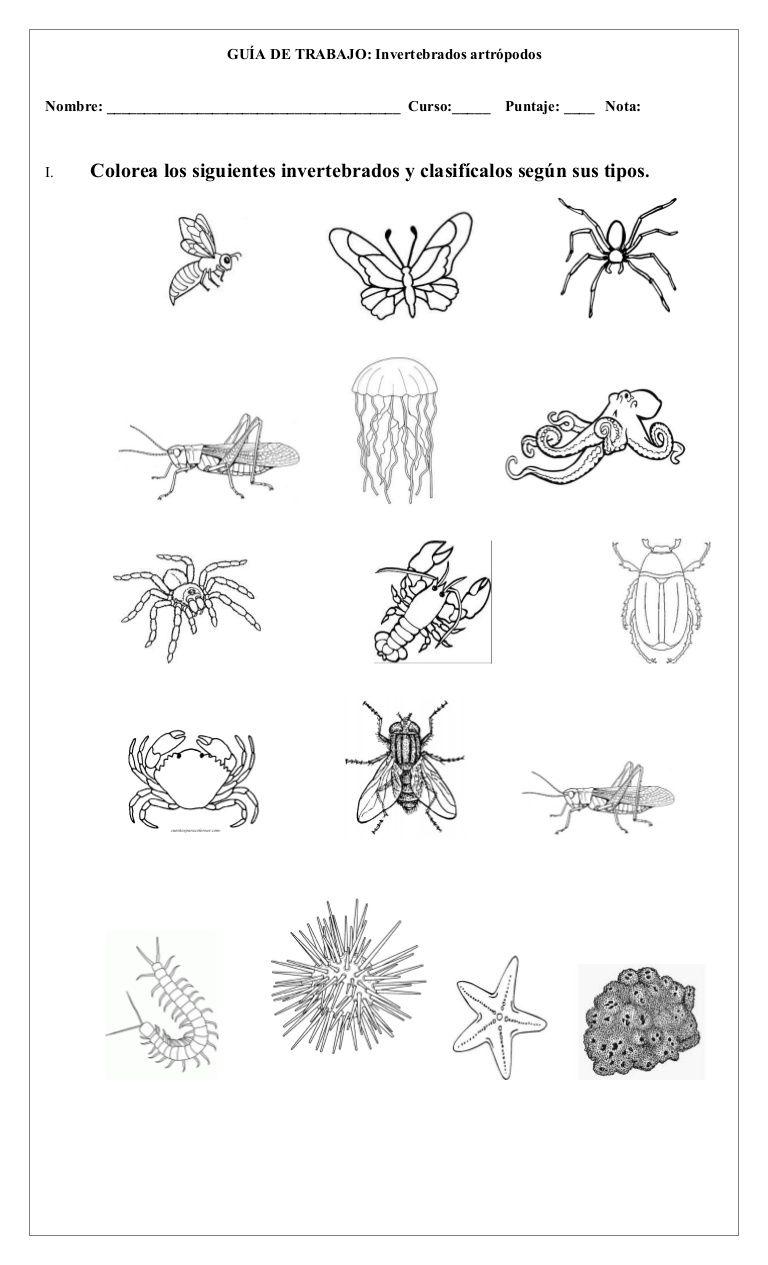 Imagen Relacionada Vertebrates And Invertebrates Vertebrates Science And Nature