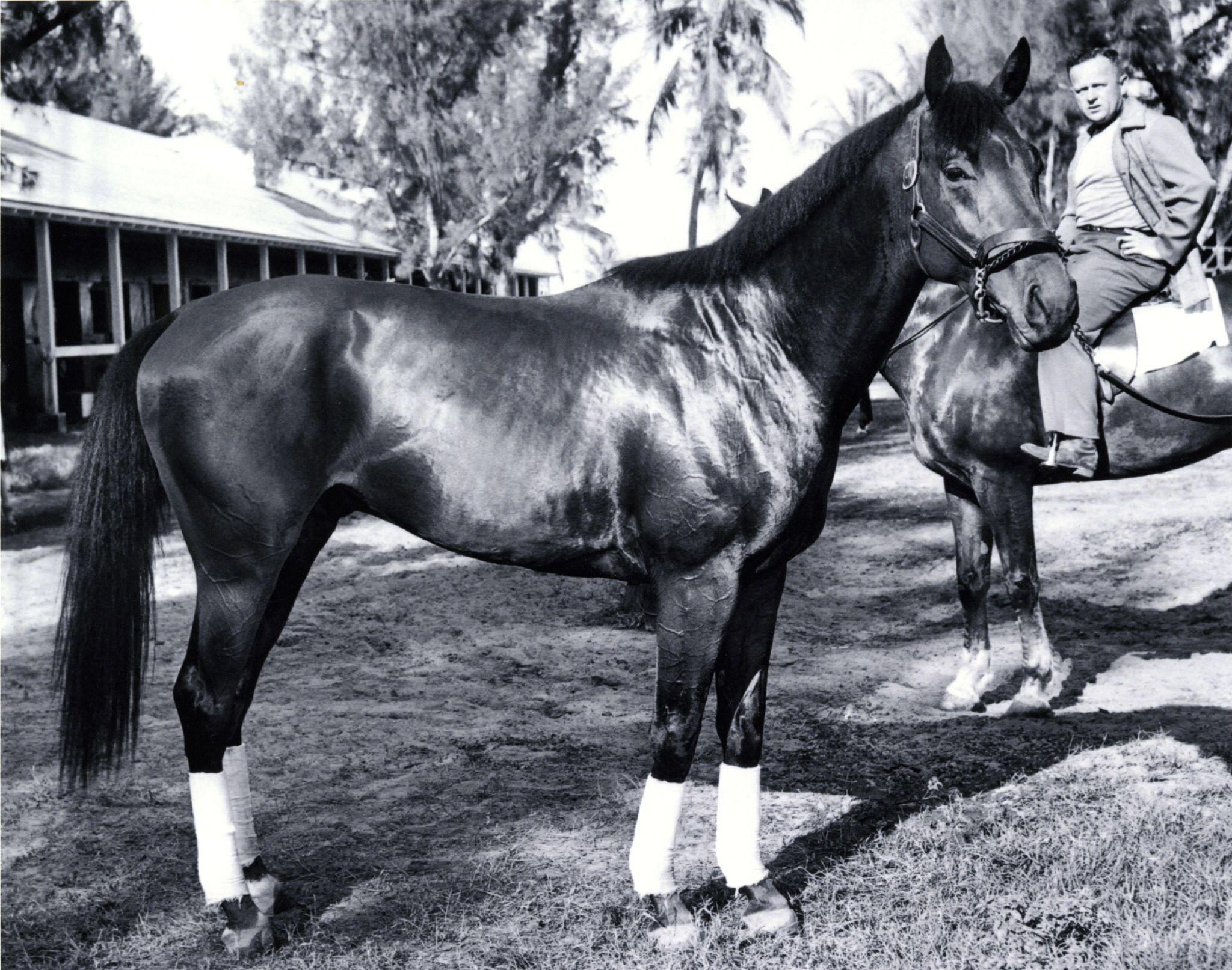 Citation | Champion Race Horses and Legendary Horseman from both ...