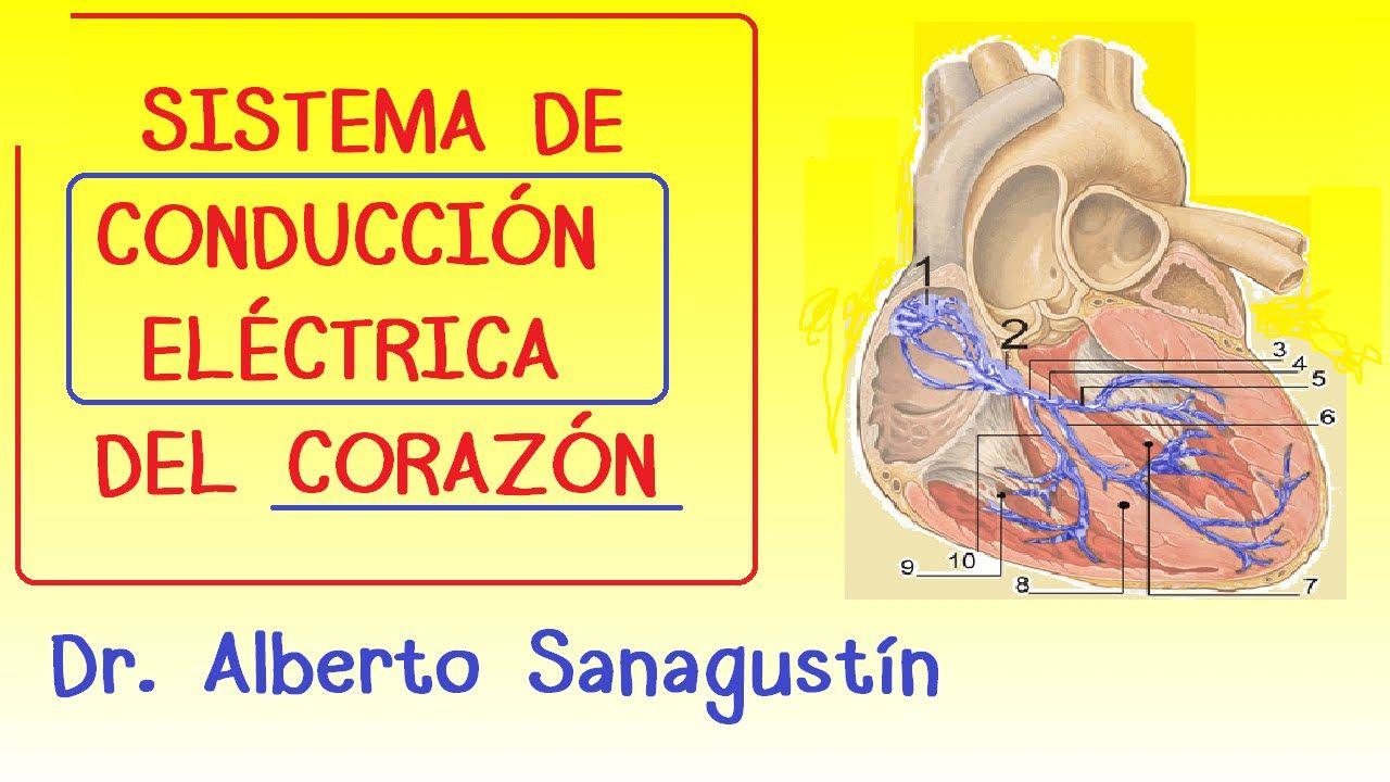 Sistema conducción eléctrica del corazón   Apuntes de medicina ...