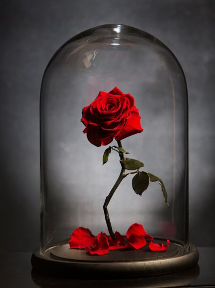 My forever Rose | For Special Ones | Pinterest | Forever rose and ...