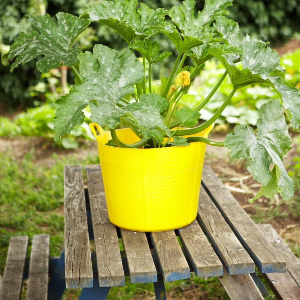 Easiest Vegetables To Grow In Flower Pots Hgtv Easy 400 x 300
