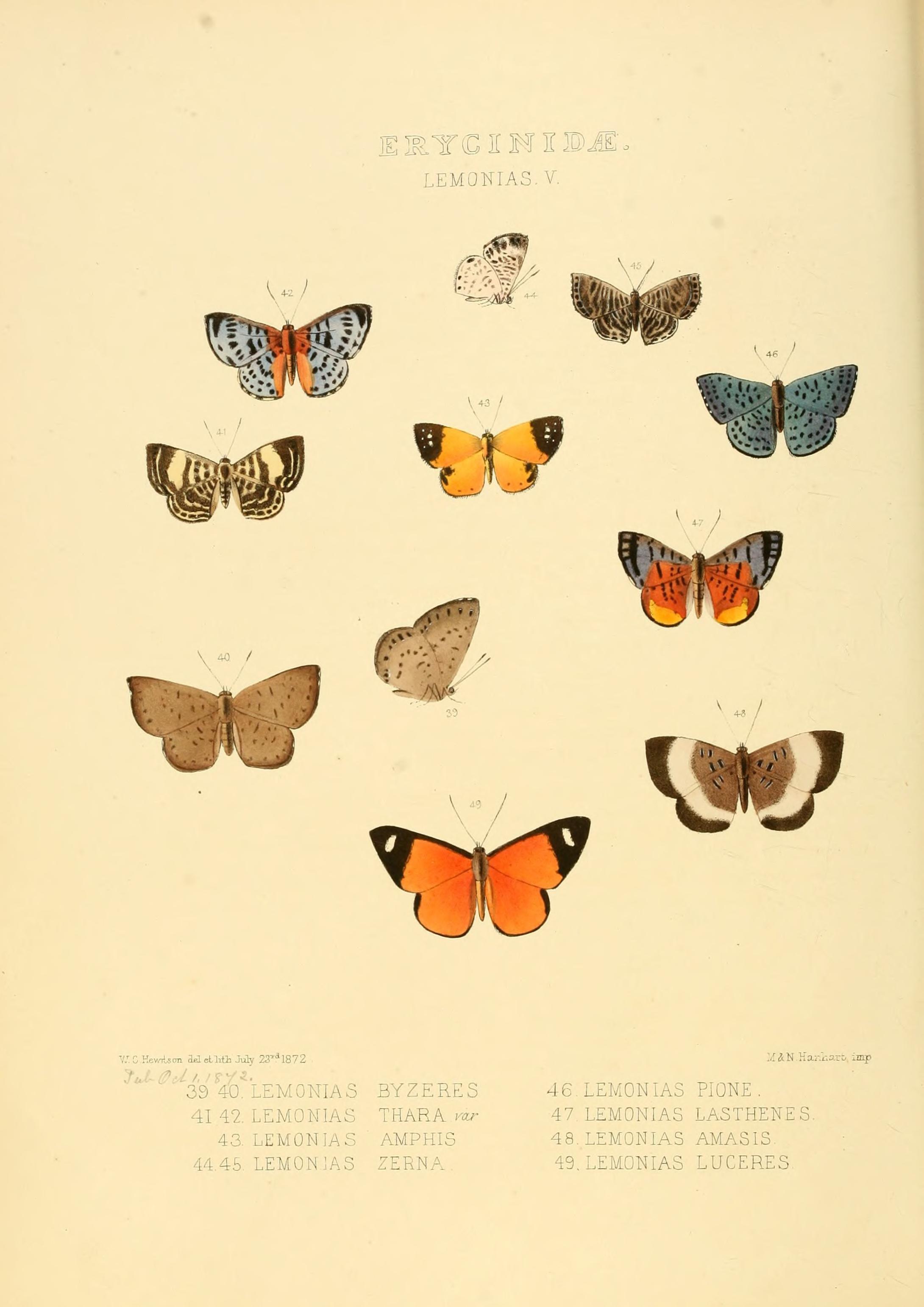 Ejemplos de nuevas especies de butterfl exótica ...