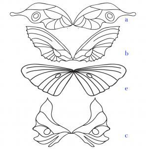 how to draw fairy wings step 4