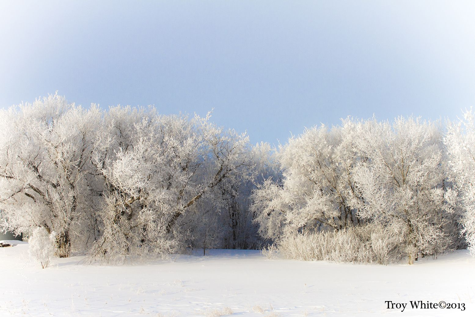 Winter Frost and blue sky