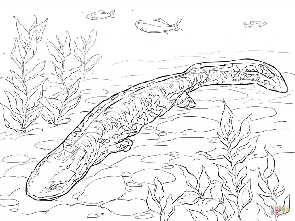 Image Result For Giant Salamander Coloring Sheet