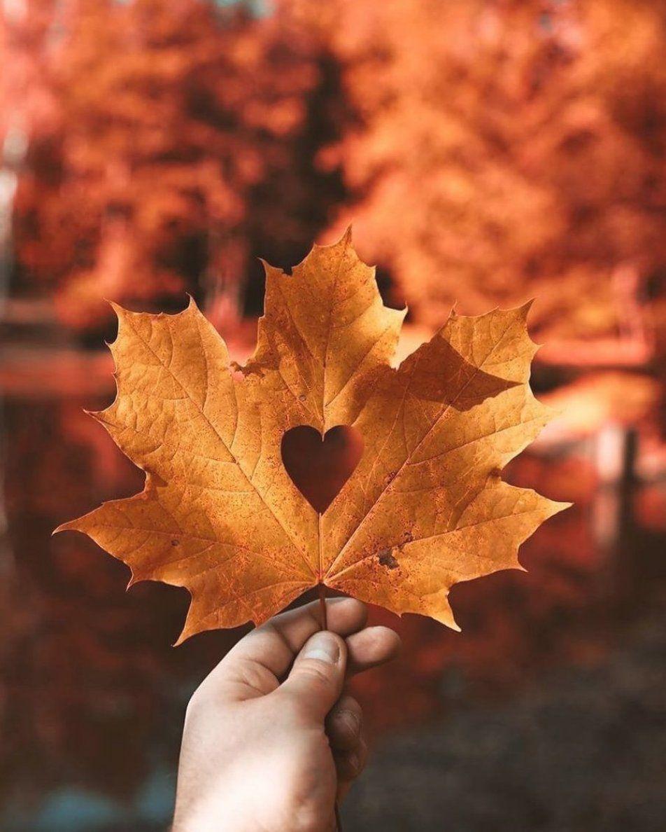 A               on Instagram     Autumn has my heart                                                                                               #fallvibes #autumnvibes #falldecor #oto  o #autumnleaves #readyforfall #halloween