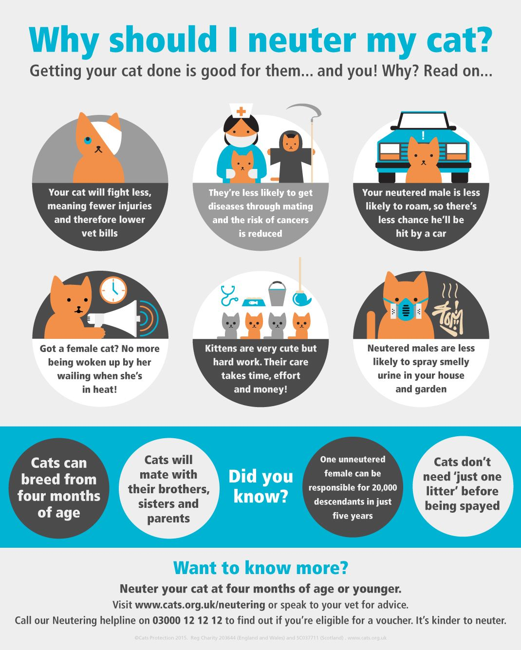 Why Should I Neuter My Cat Fun Facts About Cats Neuter Cat Care