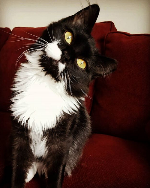 Meet The Adorable Sideways Kitten Who Found An Amazing Mom Who