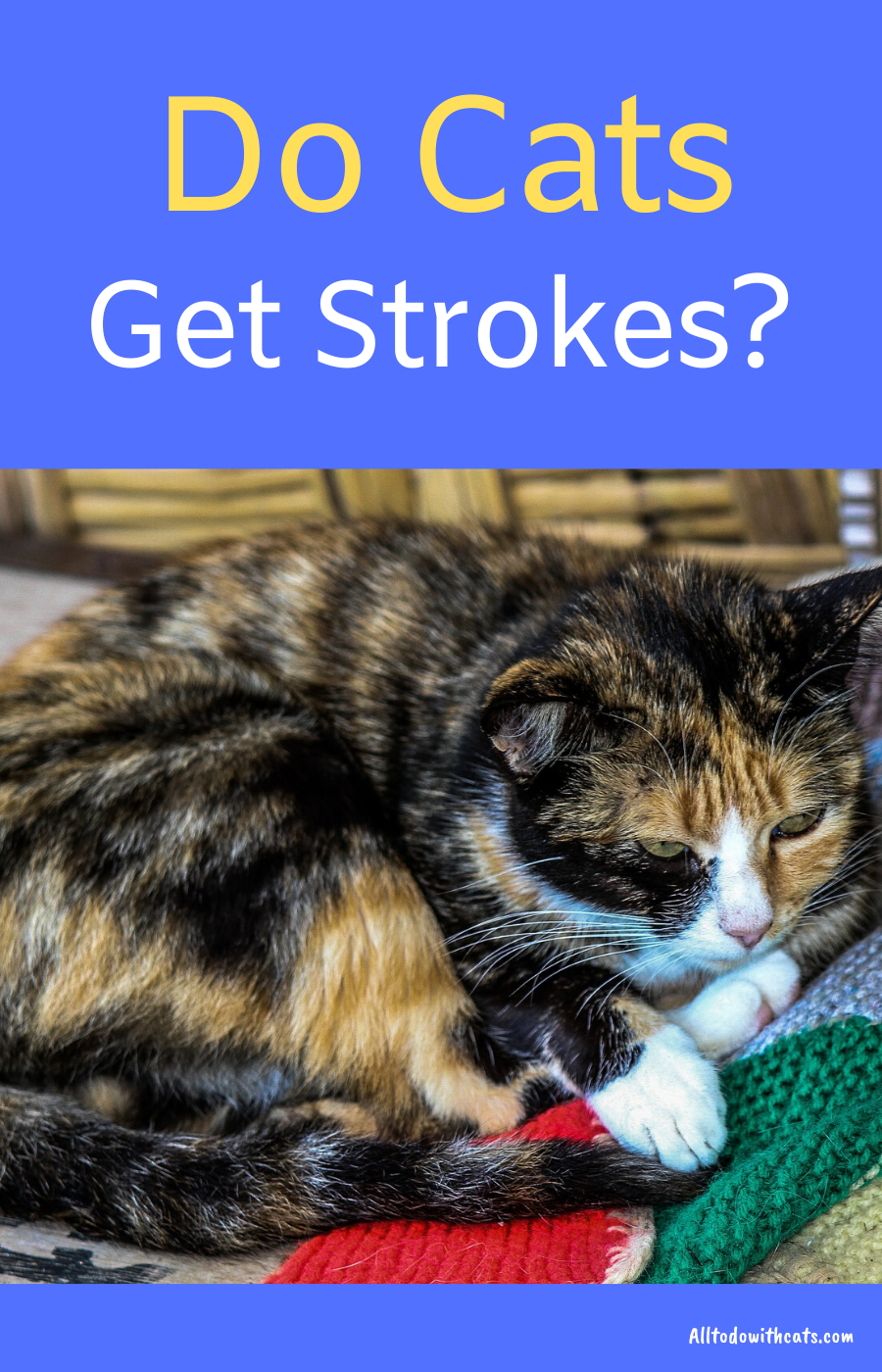 What Are The Signs Of Stroke In Cats And How Is It Treated