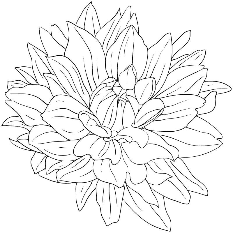 Clipart Dahlia Flower Sketch Style Flower Drawing Drawings Realistic Art