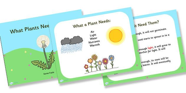 What Plants Need to Grow Powerpoint | Edu | Pinterest | Student ...