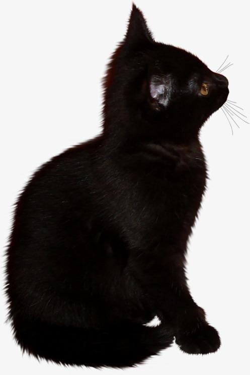 Gato Preto Do Dia Das Bruxas Black Cat Cat Clipart Cats