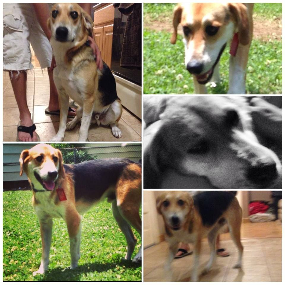7/3/14 Abandoned dog needs a good home in Springfield, MO