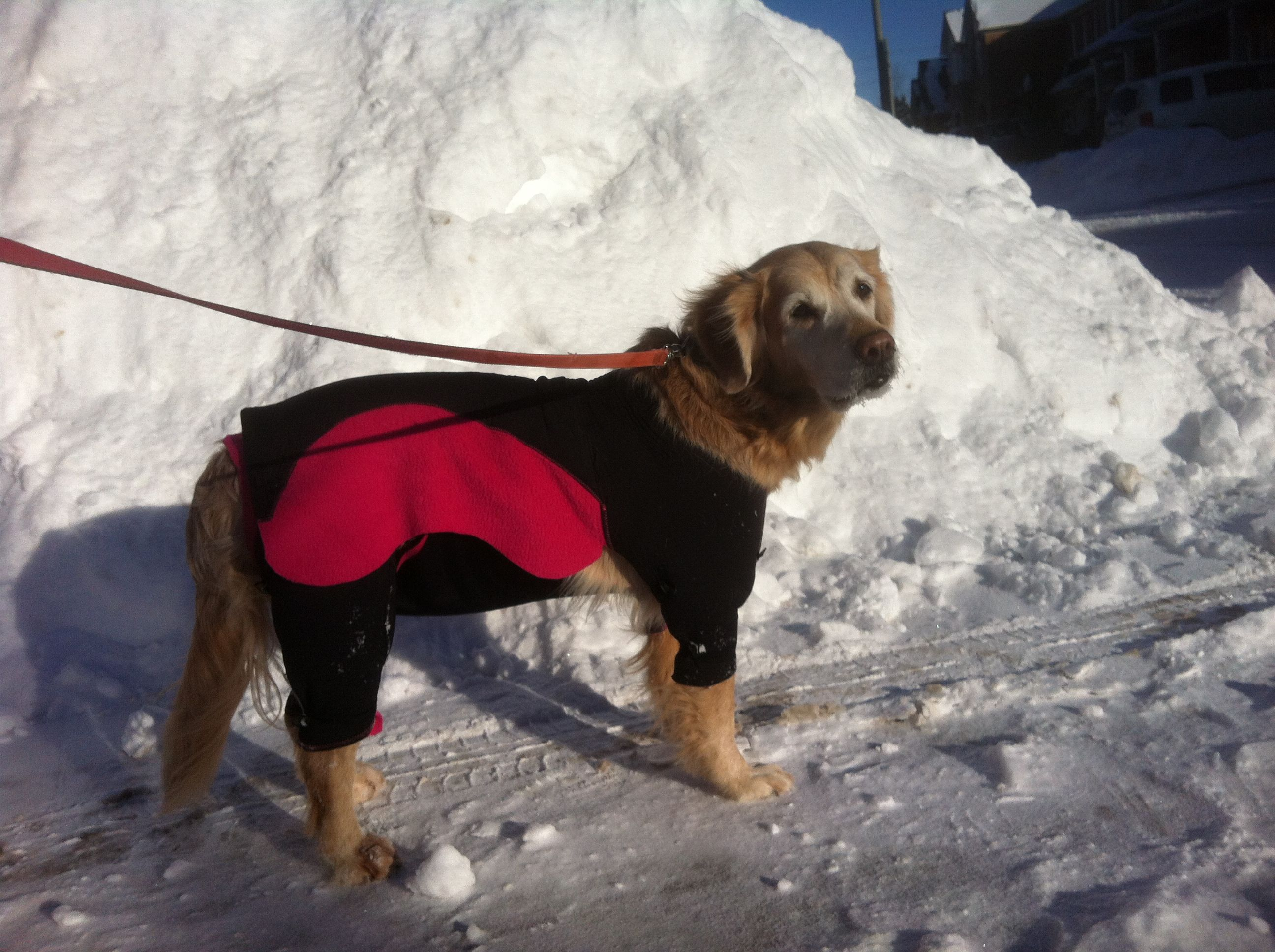 Got to love winter in Ontario! Snows the whole night long... and then - afternoon gorgeous sunshine!         www.practicaldog.ca