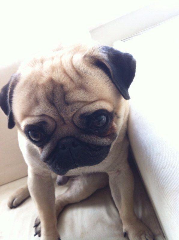 Pedrito is sleepy ;)