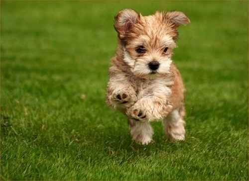Frolicking cuteness!
