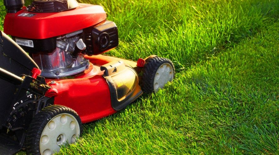 mowing mistakes Lawn care tips, Organic lawn, Lawn care