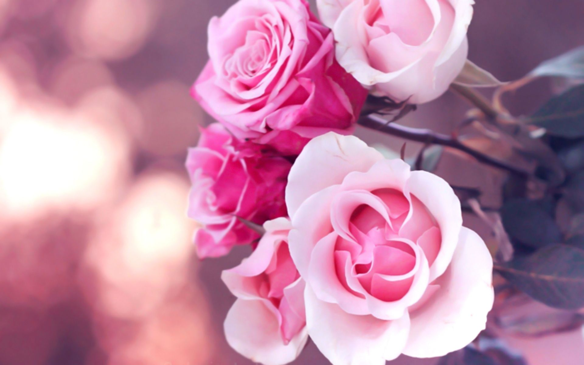 фото нежные милые цветы избавилась