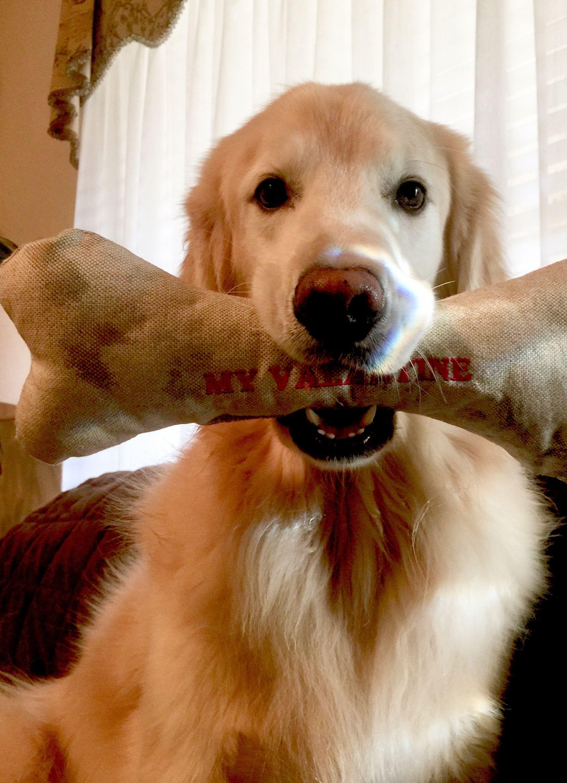 Happy valentine golden retriever pinterest pet pictures fun