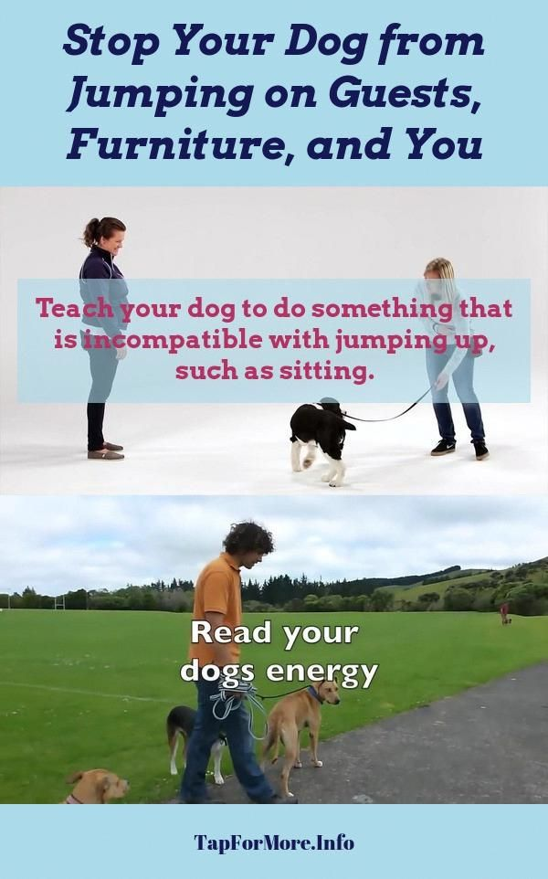 Stop Dog Jumping And How To Teach Your Dog To Shake Check Pin