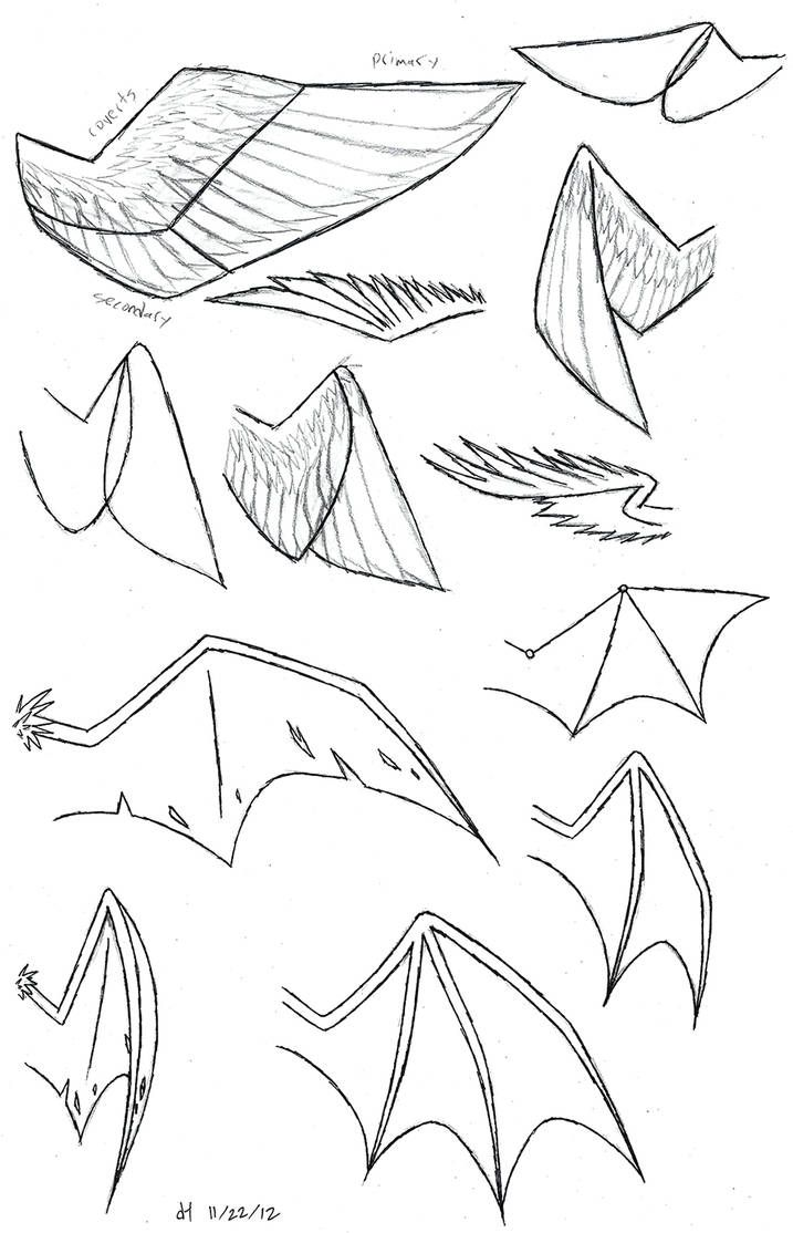 Photo of Wing Study by Violyte64 on DeviantArt