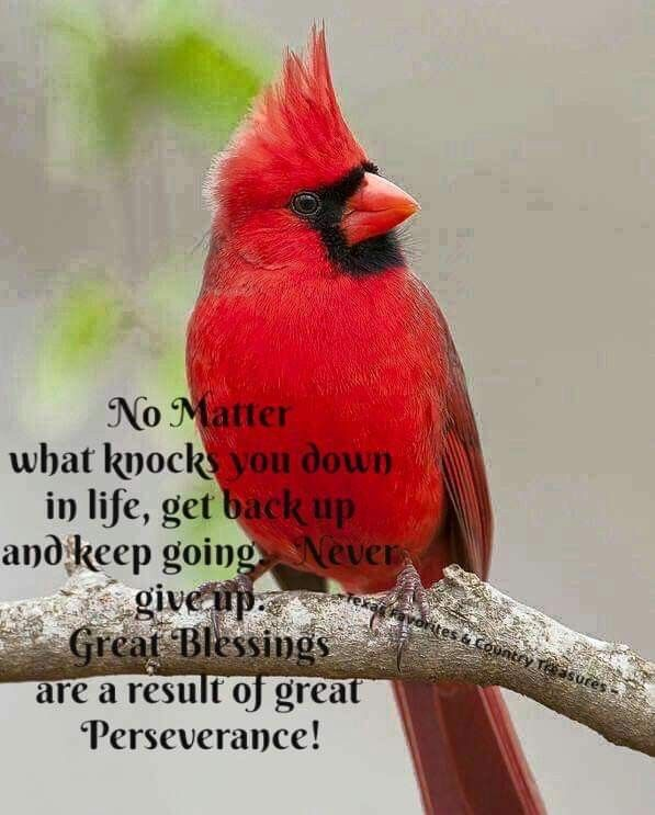 Cardinal Cardinal birds meaning, Thinking of you quotes