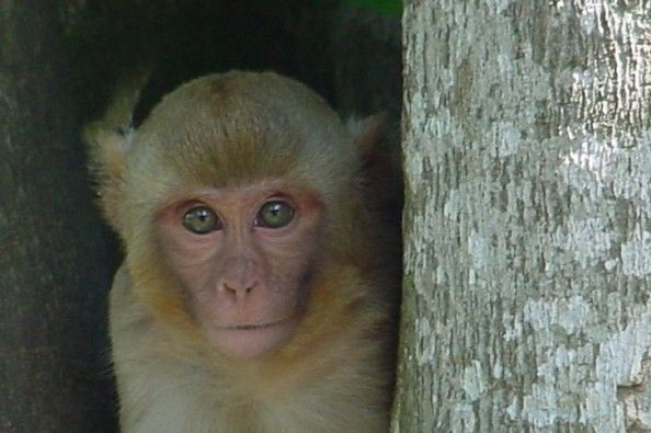 Help give these monkeys a second chance at a healthy and happy life!  Primate Research and Rehabilitation on GoFundMe