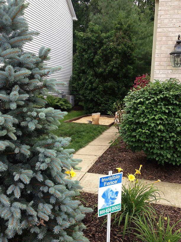 Outdoor Patio Dog Beds: How To Build An Outdoor Dog Potty Area