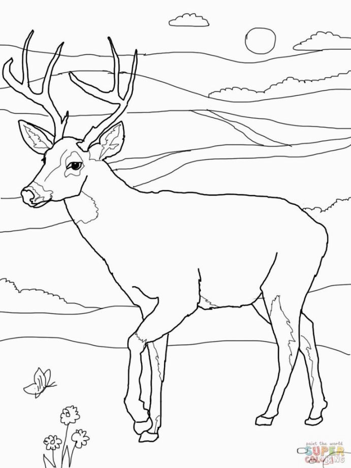 Hunting Coloring Pages With Images Deer Coloring Pages Animal